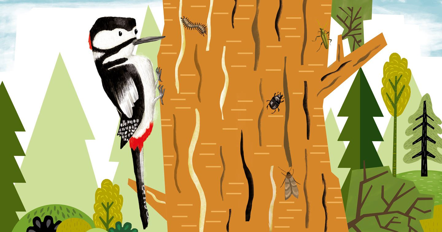 """Woodpecker"" – Illustration from ""Sing, Sang, Zwitscherklang"""