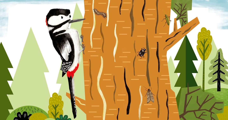 """Woodpecker"" – Illustration from ""Sing, Sang, Zwitscherklang"""