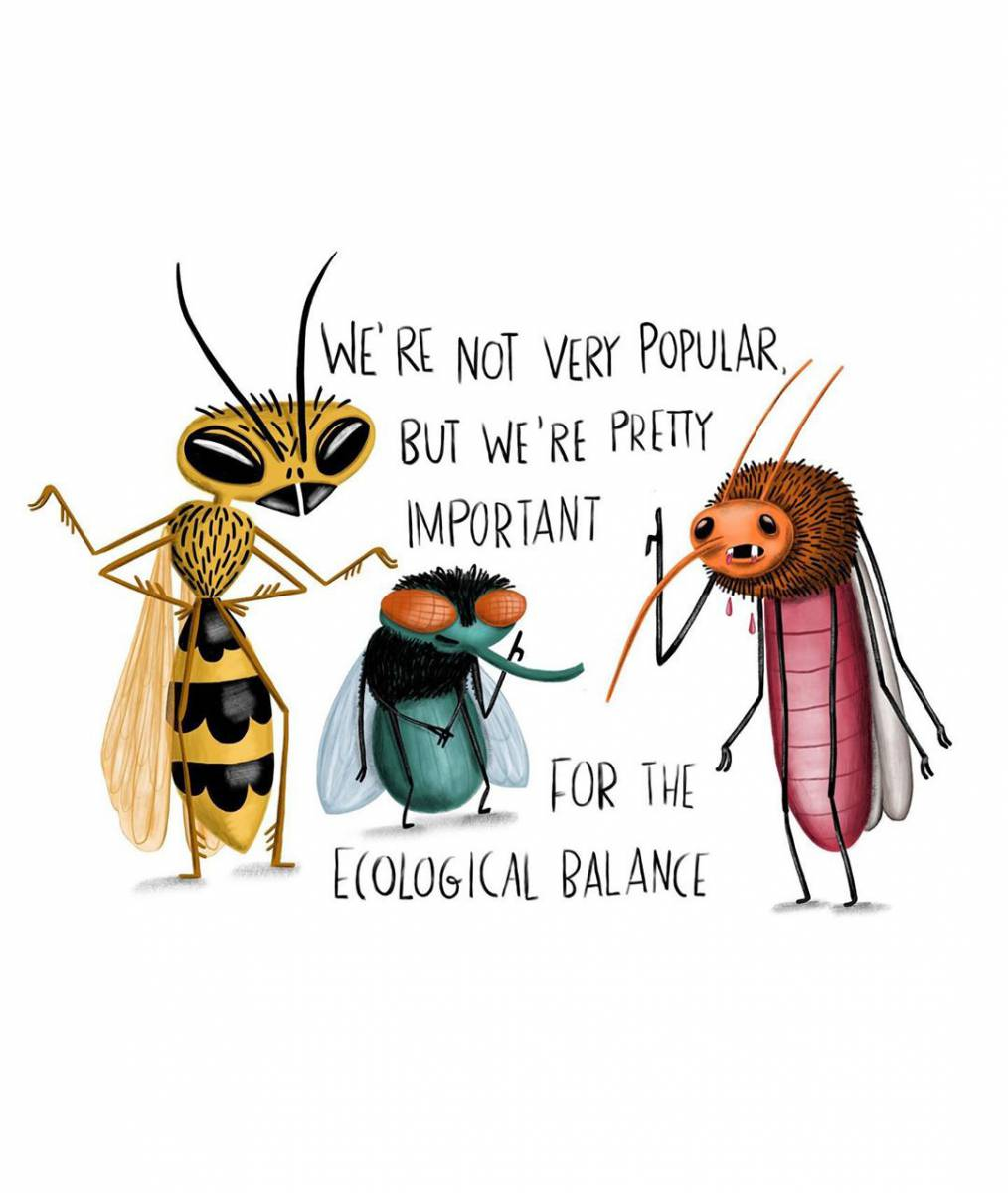 """Not popular, but important"" – illustration of insects"
